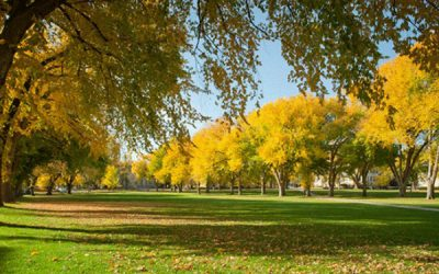 Denver A City Of Trees – That's Not Natural