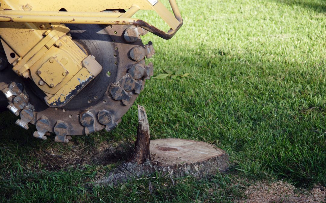 What Does it Cost to Remove a Tree and Stump?