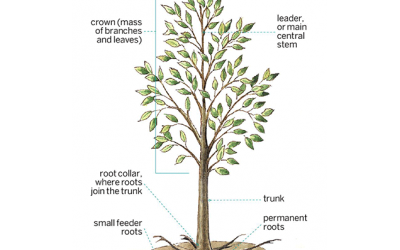 Anatomy of the Tree