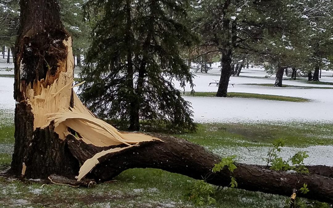 snowstorm tree damage
