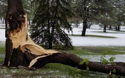 Prune Trees Before It Snows Again