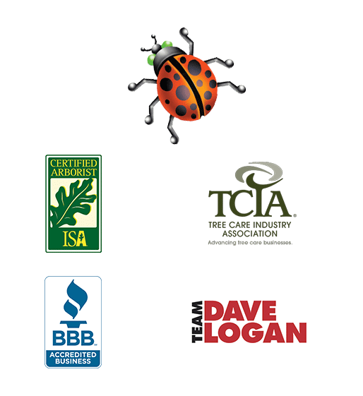 logos and ladybug